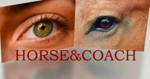 Manège Arc-en-Ciel - Le coaching assité par le cheval @ Salle B | Namur | Wallonie | Belgique